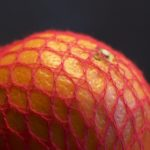 arance rete cellulosa
